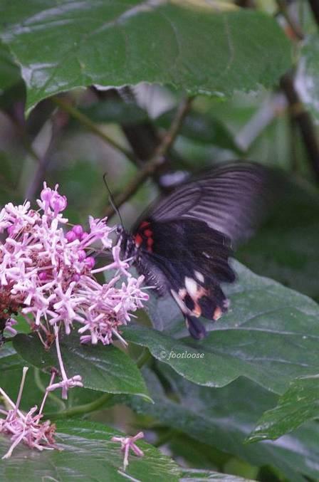 2011-07-12_022.jpg
