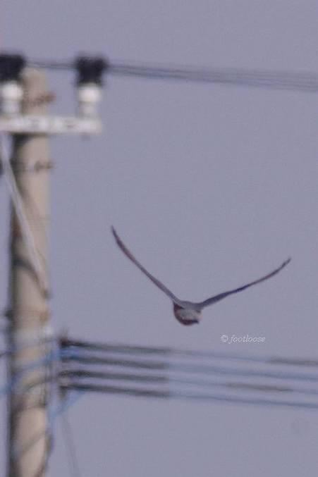2012-01-07_462.jpg
