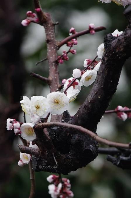 2012-03-05_014.jpg