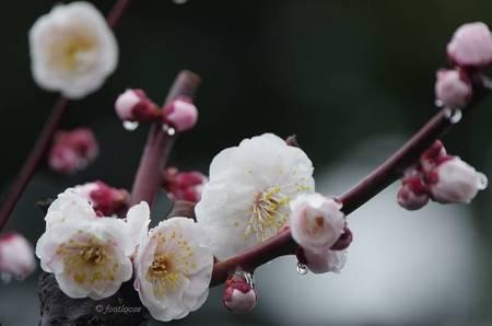 2012-03-05_021.jpg
