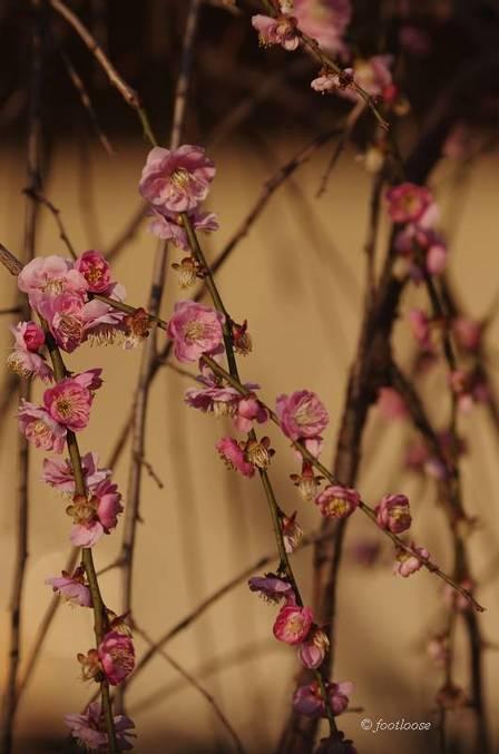 2012-03-09_061.jpg